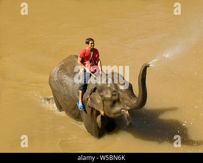 A Happy Young Thai Man called a Mahout (an Elephant Handler) on the Back of an Elephant in the River in Chiang Mai in Thailand which is a Tourist Dest - Stock Photo
