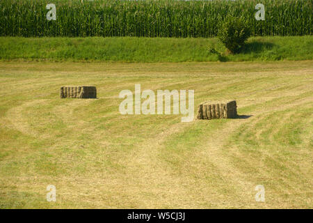 hay cuboids on a meadow in front of a green corn field as a rural backdrop, hay cuboids in bavaria - Stock Photo