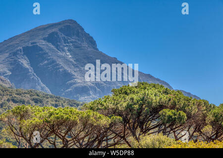 Kirstenbosch Botanical Gardens in Cape Town, South Africa. Table Top Mountain beyond the treetops. - Stock Photo