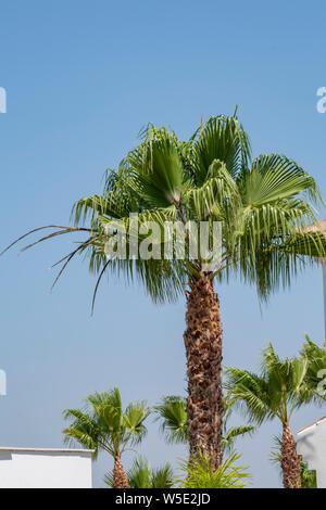 Palms against blue sky. Summer  in rhe Mediterranean - Stock Photo