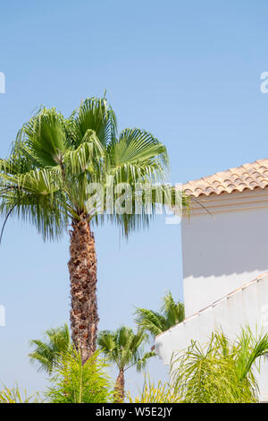 Tall palm and  white wall against a blue sky - Stock Photo
