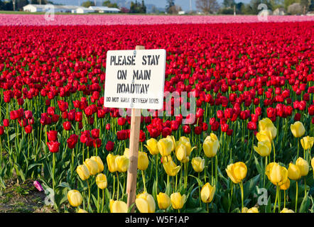 Sign warning people to stay out of the tulip fields in Mount Vernon, Skagit Valley, Washington, USA.