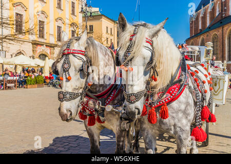 Horse drawn carriage in the main square, Rynek Glowny, in the medieval old town, UNESCO World Heritage Site, Krakow, Poland, Europe - Stock Photo