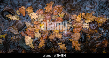 A number of autumn leaves floating on water photographed from above. - Stock Photo