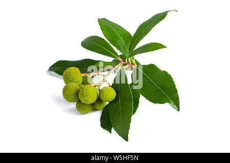 Arbutus unedo branch with fruits isolated on white background - Stock Photo