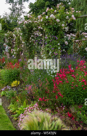 An English garden in summer. A close up on a border of herbaceous perennials in full bloom. - Stock Photo