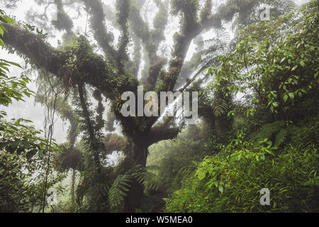 Mystical forest. Huge old tree covered with fern and plant parasite in indonesian rainforest - Stock Photo