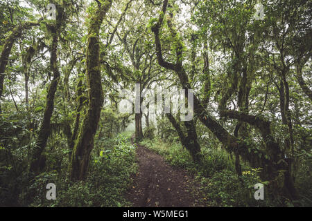 Path in mysterious forest with old huge trees covered with moss and lichen. Dark and foggy atmosphere - Stock Photo