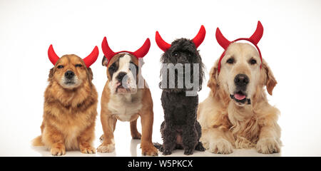 4 little dogs wearing halloween devil costume posing together, collage image - Stock Photo