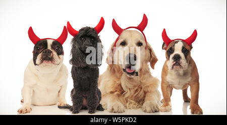 four funny little devil dogs celebrating halloween, collage image - Stock Photo