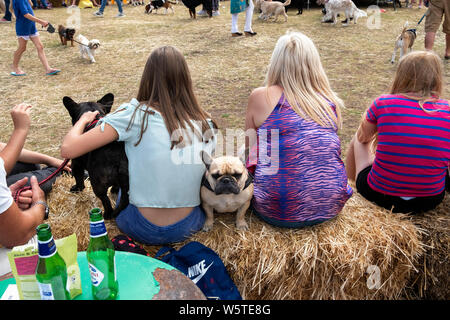 Dog Show - Stock Photo