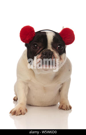 adorable french bulldog wearing red earmuffs looks at camera while sitting on a white background - Stock Photo