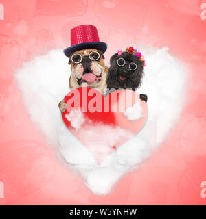 happy old couple of dogs are still sharing their love on valentine's day; senior english bulldog and poodle holding a bir read heart while standing on - Stock Photo