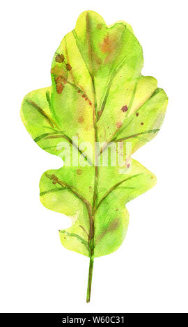 Watercolor autumn oak leaf. One fallen green leaf with yellow, orange, green, brown, ocher, red drops and splashes of color. Isolated object on white - Stock Photo