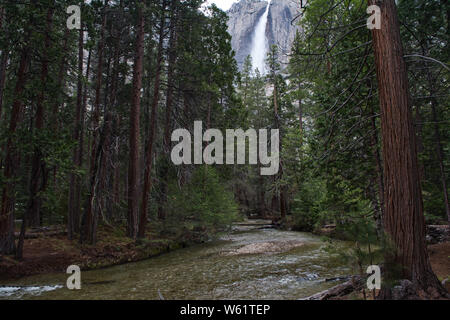 Falls Through a Forest in Yosemite - Stock Photo