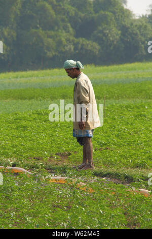 Farmer working in a field, Kolkata, West Bengal, India - Stock Photo