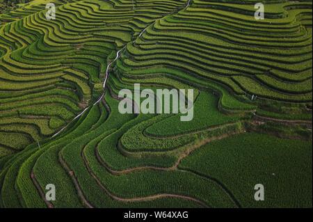Aerial view of the green Jiabang terraced rice fields in Congjiang county, Qiandongnan Miao and Dong Autonomous Prefecture, southwest China's Guizhou - Stock Photo