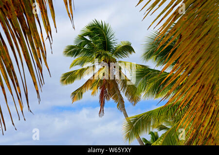 Palm beach, Island Isla Saona, Parque Nacional del Este, Dominican Republic, Carribean, America
