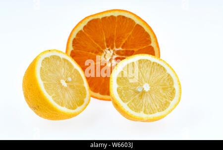 sweet orange and lemon, Citrus aurantium sinensis, Citrus lemon - Stock Photo