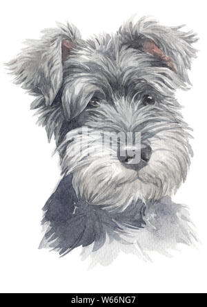 Water colour painting of Miniature Schnauzer 020 - Stock Photo