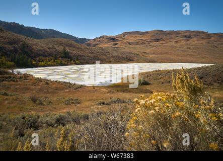 Spotted Lake Osoyoos Canada. The Spotted Lake near Osoyoos Canadais a saline alkali lake that creates the circles when it dries out in the summer. - Stock Photo