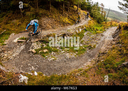 BALLINASTOE, IRELAND. Three mountain bikers riding a hairpin bend through the forest in the purpose built MTB trail centre. - Stock Photo