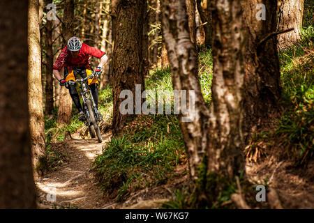BALLINASTOE, IRELAND. A mountain biker riding a narrow trail through the forest in the purpose built MTB trail centre. - Stock Photo