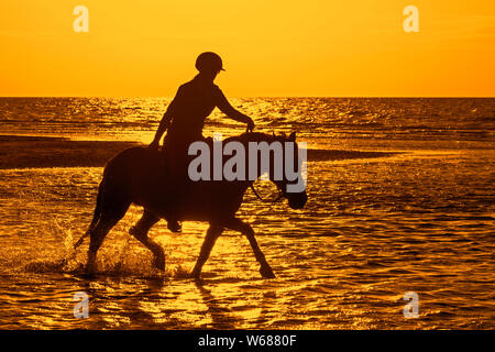 Horsewoman / female horse rider on horseback riding through water on the beach along the North Sea coast, silhouetted at sunset in summer - Stock Photo