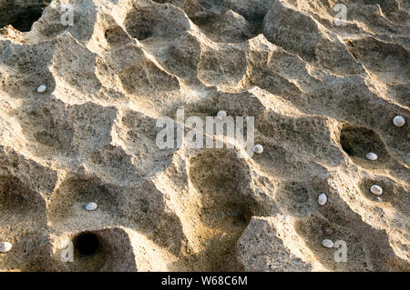 Porus rock corral on beach with sea shells embedded in it. Shows samples that will be loved by avid rock or mineral collectors or even by normal touri - Stock Photo