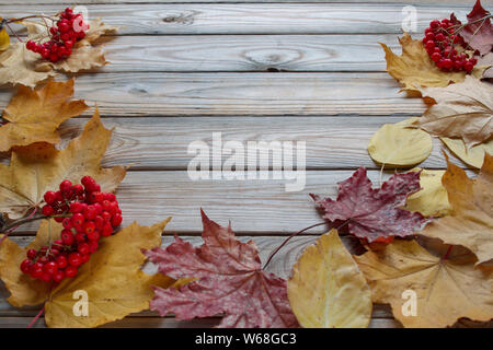 Branches of rowan tree and dry autumn leaves are lying on a wooden desk. Autumn still life. Copy space for your text. - Stock Photo