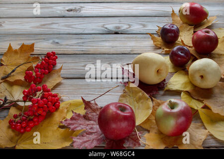 Autumn leaves, branches of rowanberry and various fruits are lying on a wooden desk. Autumn still life. Copy space for your text. - Stock Photo