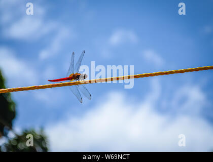 Red Dragonfly dancing on a yellow plastic rope against a blue sky background. - Stock Photo