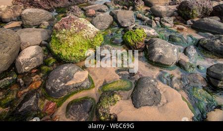 Colourful rocks on the beach at Devgad,Sindhudurga,Maharashtra,India,Asia - Stock Photo