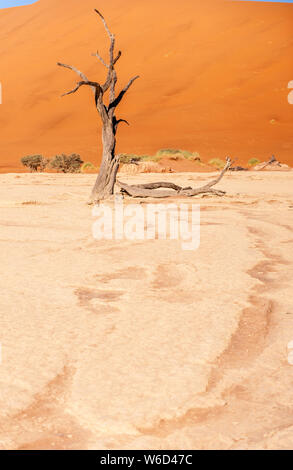 Dead Trees against against the red backdrop of the towering sand dunes of Namibia's Deadvlei - Stock Photo