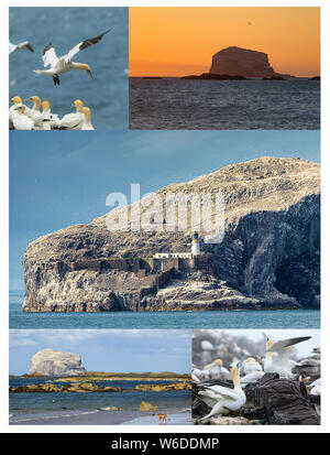Collage from photos. View on Bass Rock and North Sea coast. Bass Rock - island where live colony of northern gannets. - Stock Photo