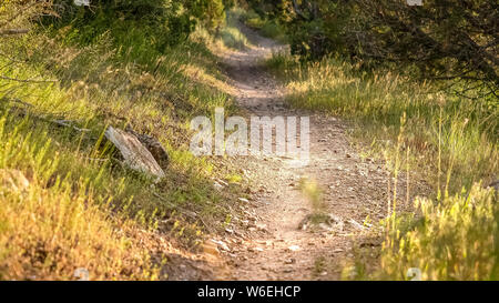 Panorama frame Close up of a sunlit and narrow dirt road in the forest on a sunny day - Stock Photo
