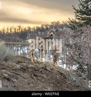 Square Gray deers in the wilderness with a shiny lake and cloudy sky in the background - Stock Photo