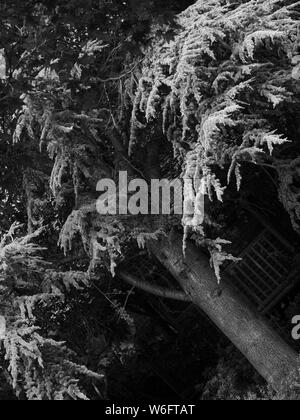 Garden tree and tree house in a black and white photo. - Stock Photo