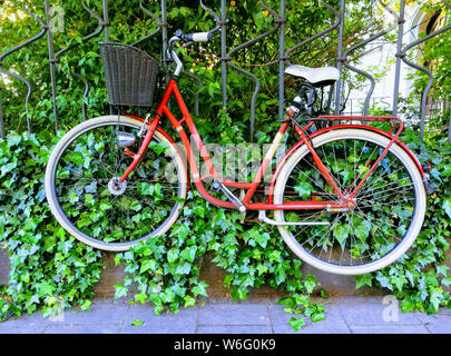 A red bicycle hooked on an ivy covered iron fence. - Stock Photo