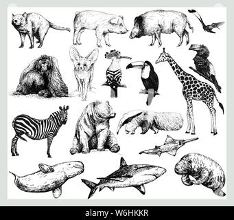 Big set of hand drawn sketch style wild animals isolated on white background. Vector illustration. - Stock Photo