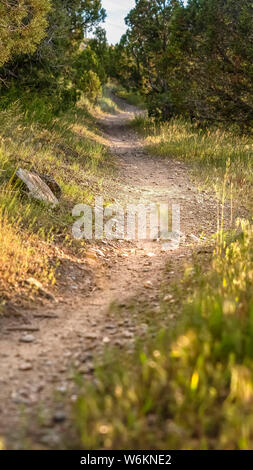 Vertical frame Close up of a sunlit and narrow dirt road in the forest on a sunny day - Stock Photo