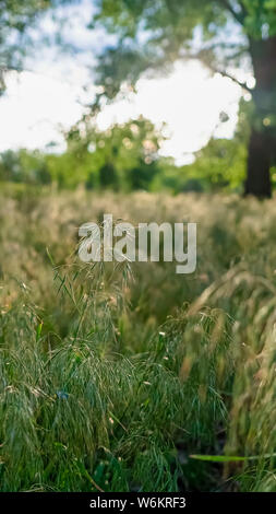 Vertical frame Prolific sunlit green grasses growing in the wilderness viewed on a sunny day - Stock Photo
