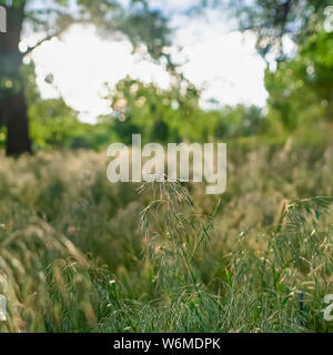 Square frame Prolific sunlit green grasses growing in the wilderness viewed on a sunny day - Stock Photo