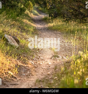 Square frame Close up of a sunlit and narrow dirt road in the forest on a sunny day - Stock Photo