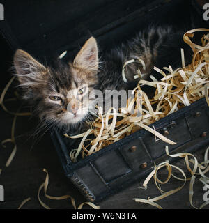 A small, fluffy kitten lying in a box with sawdust. Top view - Stock Photo