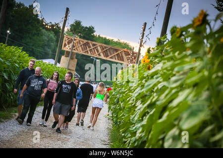 Brezje, Croatia - 20th July, 2019 : People walking thru the field of sunflowers on the entrance to the Forestland, ultimate forest electronic music fe - Stock Photo