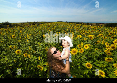 Rhossiil, Wales, UK. Friday, 2nd August 2019 Thousands of people are travelling to Rhossili on the Gower peninsular in South Wales, UK, to see the fields of sunflowers which have become a major attraction for visitors to the area. The National Trust, who manage the fields, are expecting crowds to peak this weekend as the sunflowers have become a must have selfie location for todays Instagram generation, who want to picture themselves amongst the beautiful flowers whilst enjoying the record breaking Summer weather in the UK. Credit : Robert Melen/Alamy Live News. - Stock Photo