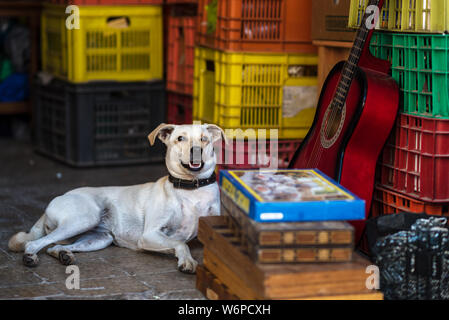 Stray dog lie down on the floor in the street market, urban place. - Stock Photo