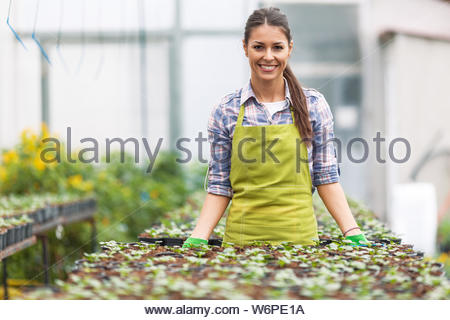 Female florist working in her greenhouse,selecting flowers. - Stock Photo