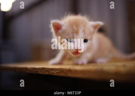 alone small red kitten meows outdoor, looking for his mother - Stock Photo